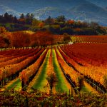 Two lessons from the wine industry for destination marketers