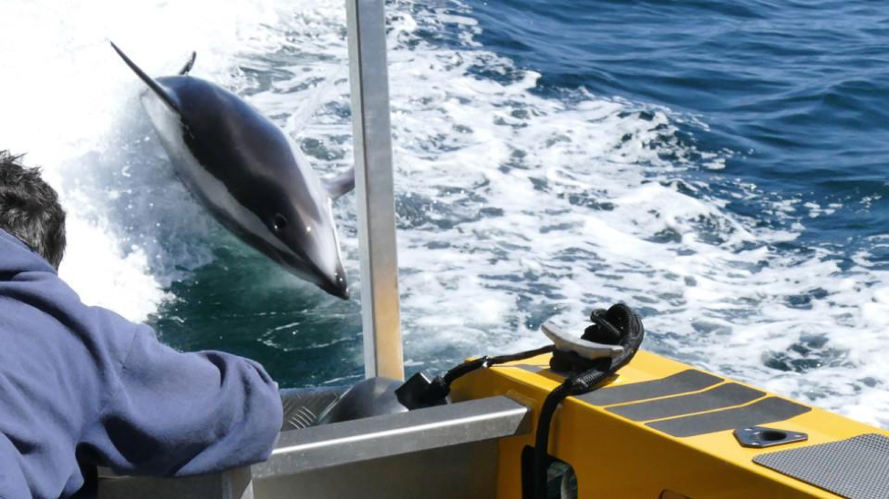 Whale watching and Wi-Fi: Why building the right infrastructure makes a tourism experience more socialgenic